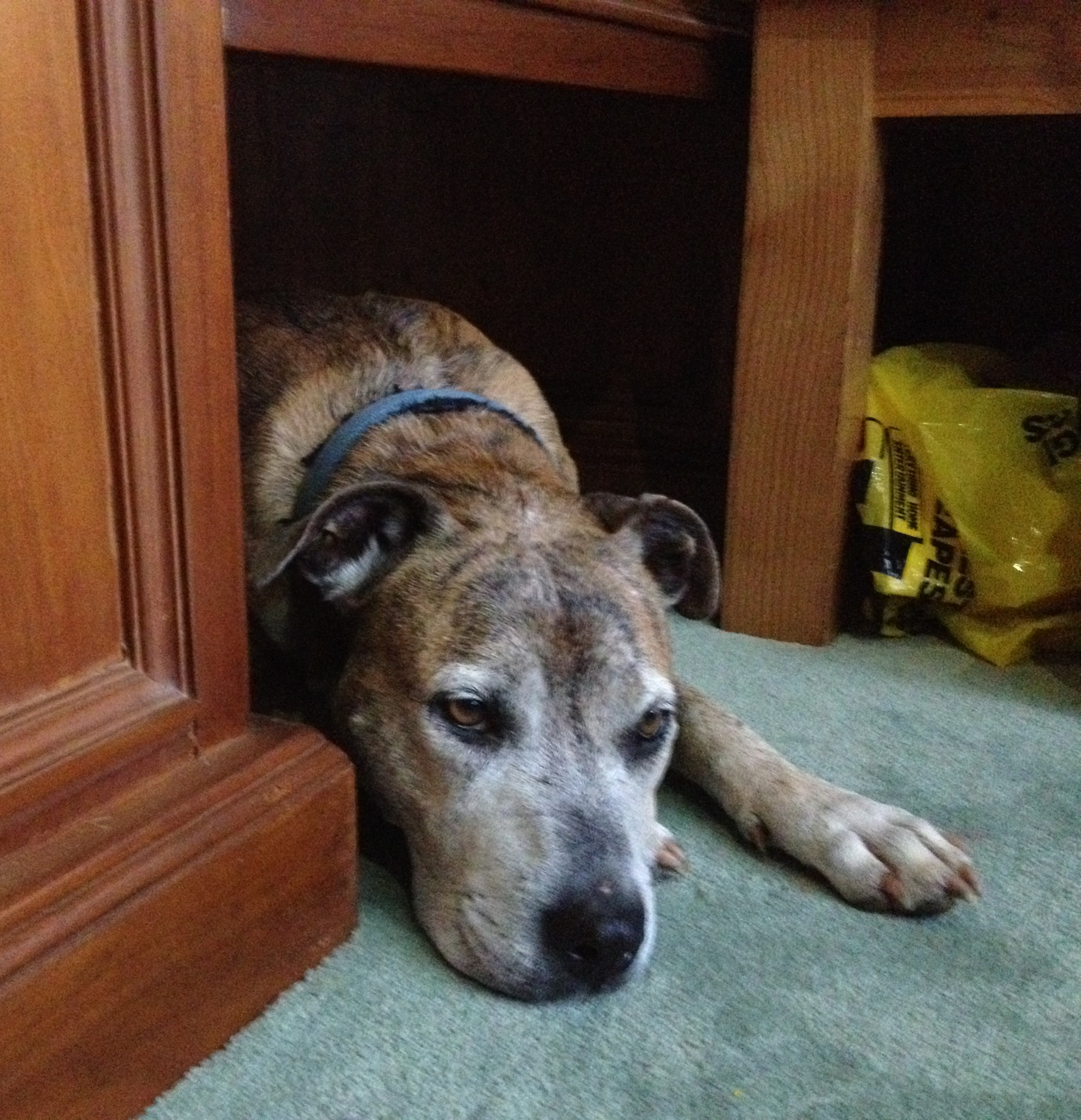 Tigger under my desk photo - Alyssa